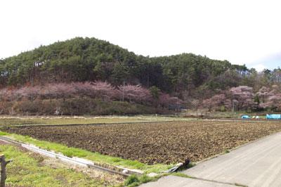 坂田山共生の森