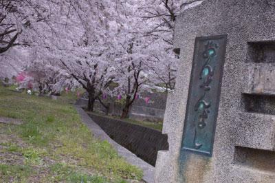 温泉橋の桜